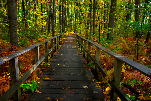 autumn trees red fall nature colors landscape coast wooden woods colorful bright quote path wildlife maine trail boardwalk railing ferns pathway rachelcarson refuge
