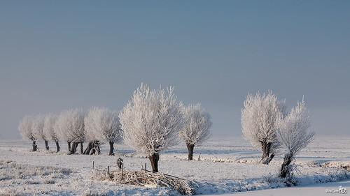 trees winter mist snow ice netherlands fog canon bomen hoarfrost widescreen sneeuw nederland meadow explore willow wonderland polder 169 kinderdijk alblasserwaard weiland ijs zuidholland wilgen alblasserdam rijp canoneos5d canonef24105mmf4lisusm bracom bestevergoldenartists besteverexcellencegallery bramvanbroekhoven
