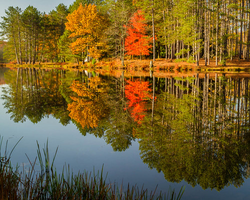 autumn trees dog reflection fall landscape photography photo newjersey pond woods seasons unitedstates collection gathering collecting select generic publish harvesting sandyston publishflickr collectionforests collectionfallcolors