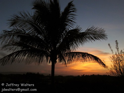 sunrise palmtree jamaica mandeville knockpatrick