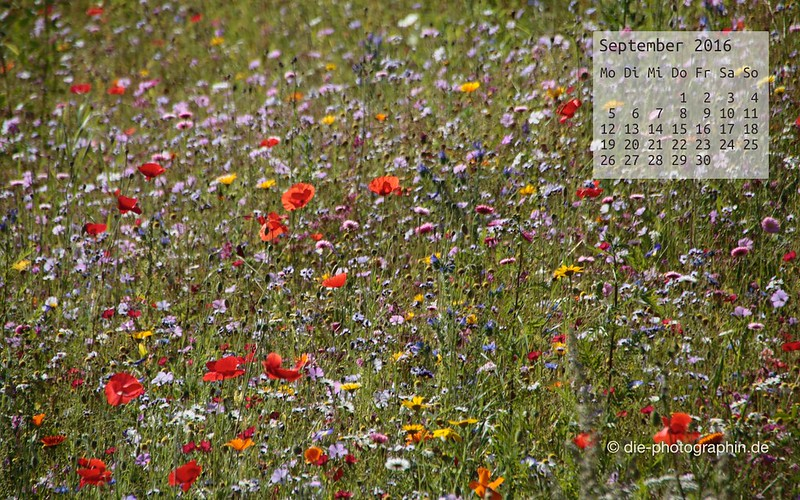 blumenwiese_september_kalender_die-photographin