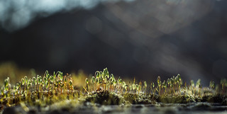 Macro Wilderness | by Mister.render