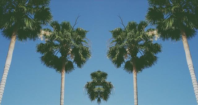 Splitpalms