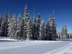 月, 2013-02-25 11:26 - 絶好のスキー日和