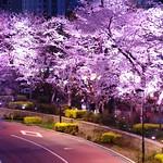 東京ミッドタウン Midtown Blossom 2013 Tokyo Midtown