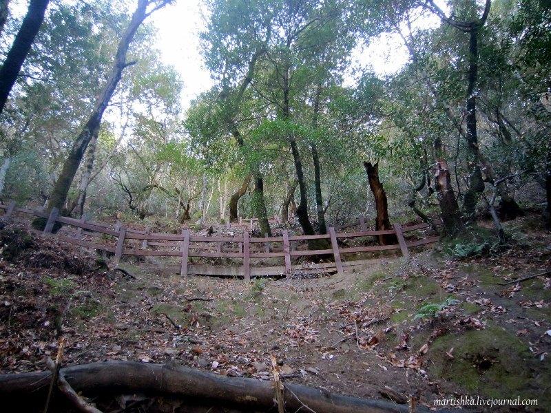 San Jose_Alum Rock Park (31)