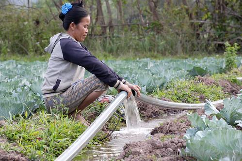 Villager tending her vegetable garden close to Nam Hai river, Lao PDR