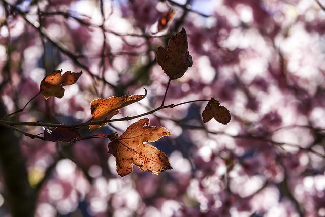 Winter leaves 殘葉
