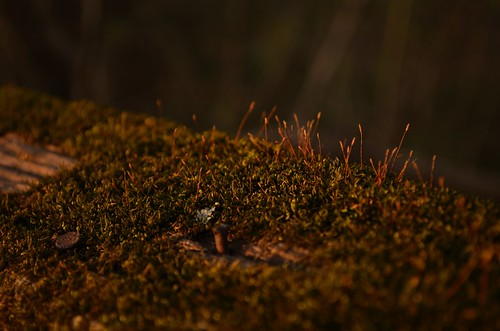 sunset green moss dusk d5100