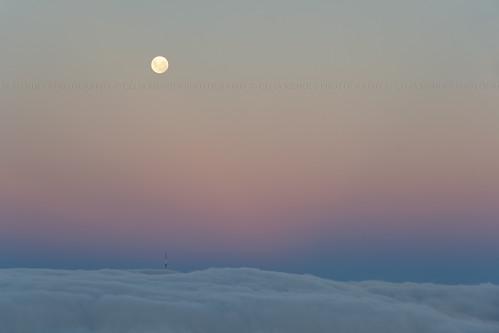 pink blue newzealand sky tower azul clouds torre softness céu fullmoon moonrise cielo nubes nuvens lunallena corderosa beltofvenus novazelândia nuevazelanda rosado luacheia suavidad suavidade 2013 nascerdalua cinturóndevenus cinturãodevénus