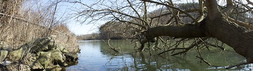park lake tree water island march rocks branch north panoramic marshall limb
