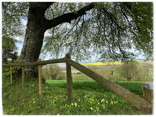 tranquility peace trees tree spring uk somerset iphone landscape