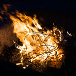 Thicket on Fire