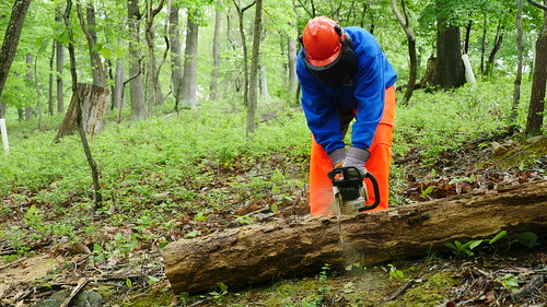 Photo of forest products worker sawing log with a chainsaw
