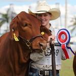 Stud Cattle - Kent Ward Thursday
