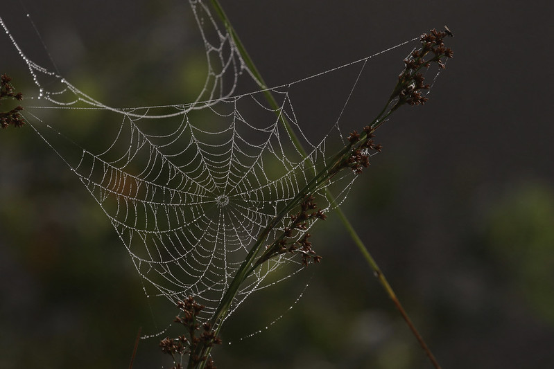 Spider web_199A3485