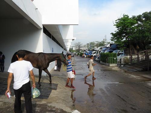 ロイヤルターフクラブ競馬場のスタンドからレースを終えた馬が出てくる