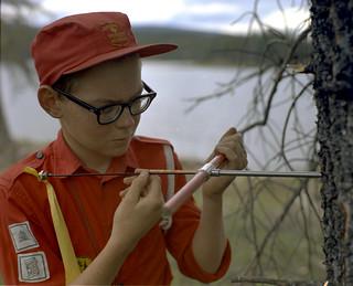 Inspecting a tree, Blue Lake, Alberta