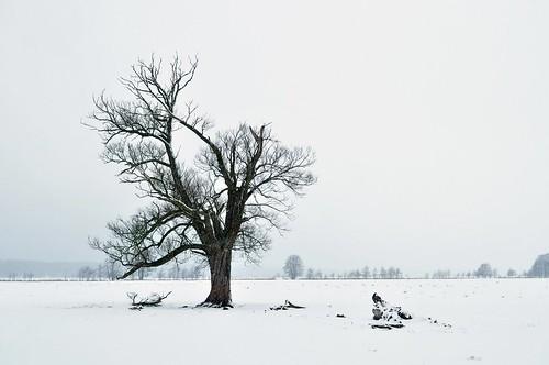 Winter | by rainerSpunkt
