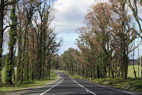 Fire damaged trees flank the Princes Highway near Orbost