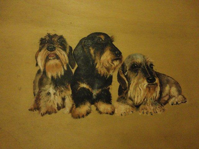 three varieties of Wire-haired Dachshund