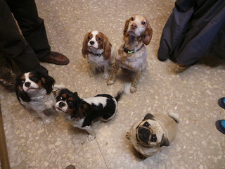 Spanish vets pets | by Rayya The Vet