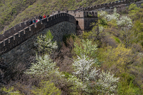 Springtime blossoms along the Great Wall of China | by Phil Marion (173 million views - THANKS)