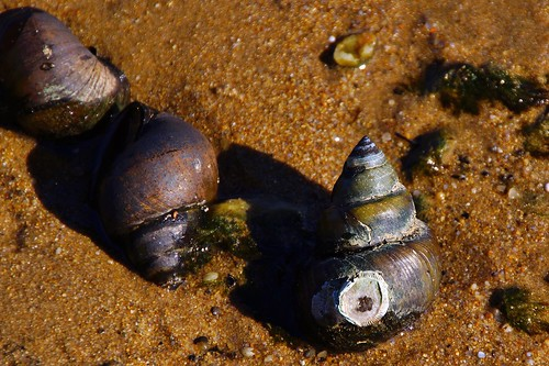 Unknown Shell at Leesylvania State Park   by Stephen Little