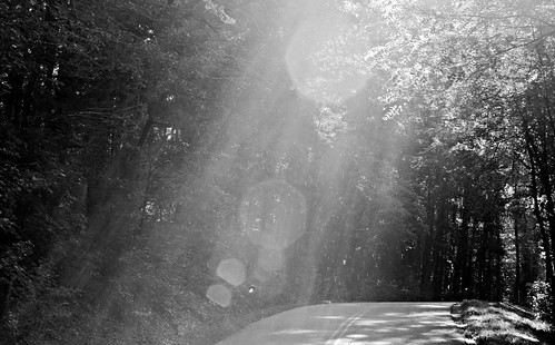 road street trees light blackandwhite plants sun mist tree nature canon southcarolina flare sunflare travelersrest blackwhitephotos 60d 55250mm