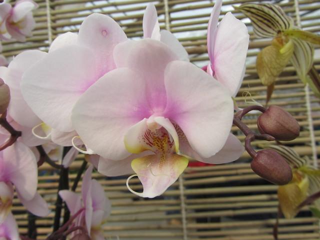 Denver Orchid Society 148