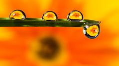 Beauty of Droplet
