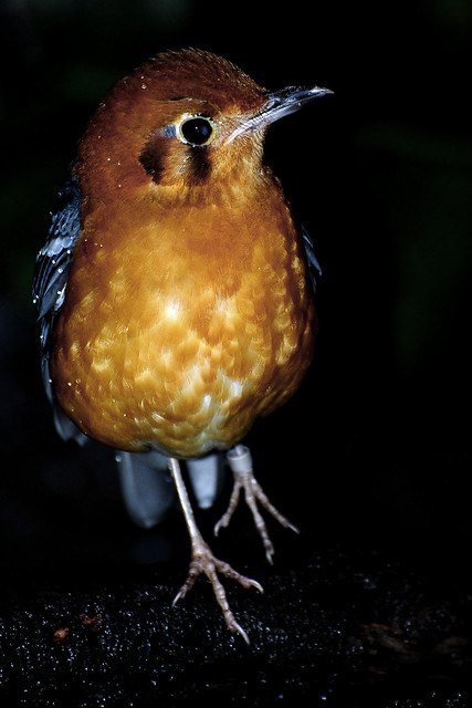 Bird Walkthrough 1 130321