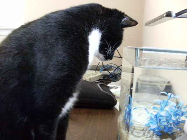 Our Cat Moe Fishing.