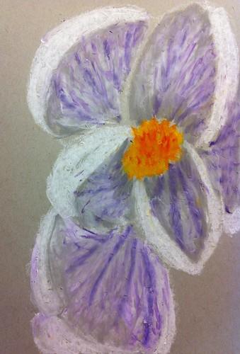 090:365 White & Purple Crocus | by allida