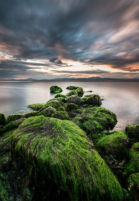 Algae covered rocks at Salterstown Pier, Dundalk, Ireland