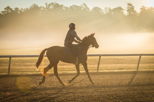 fog horse thoroughbred equestrian aikentrainingtrack aiken training track sun sunrise golden adobe adobelightroom jockey racing
