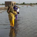 44356-022: National Flood Emergency Response in Pakistan