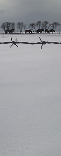 Horses in the snow   by Disjointed Reality