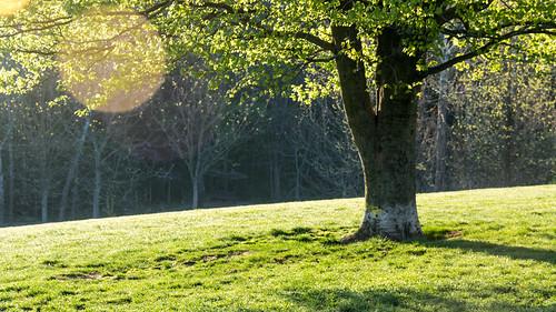park dog sunrise spring nikon ky hill louisville cherokee d3200