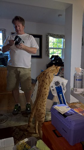 Inferno the Cat trying to climb L3-G0 the Lego R2-D2   by kresty