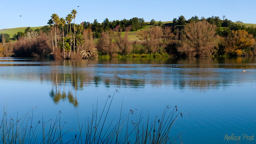 california ca blue lake plant reflection tree reed nature water birds landscape palm napa dirosapreserve dirosa magicmomentsinyourlifelevel2
