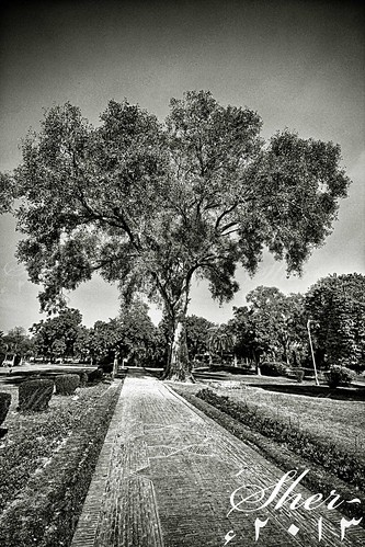 tree monochrome nopeople serenity tall lonliness nothingness jinnahpark mygearandme photographyforrecreation rememberthatmomentlevel1 flickrsfinestimages1