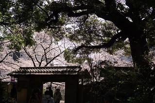 Daylight@Chinzansou_Tokyo