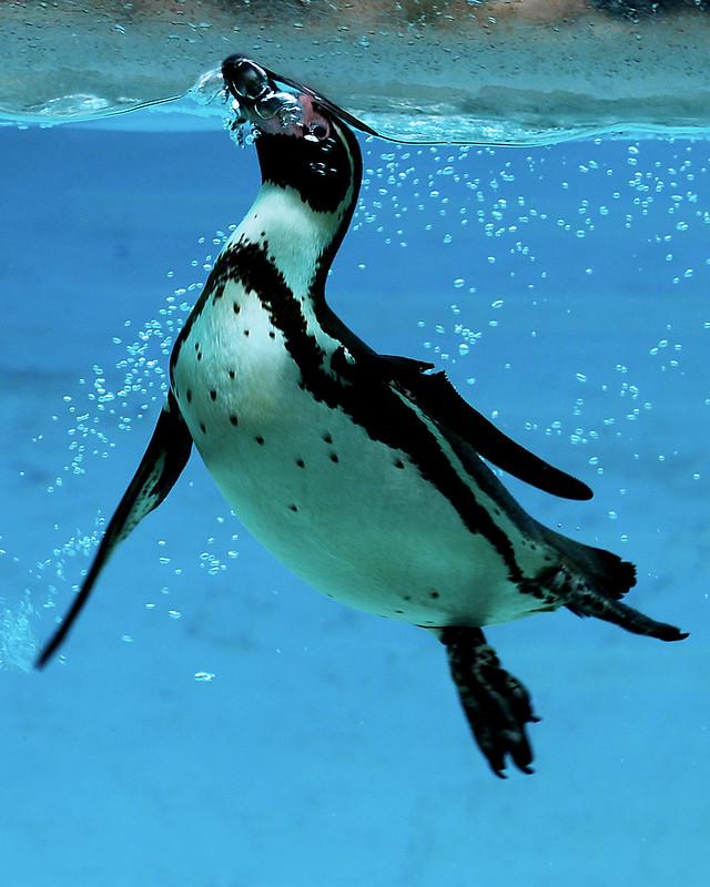Penguin Surface 130321