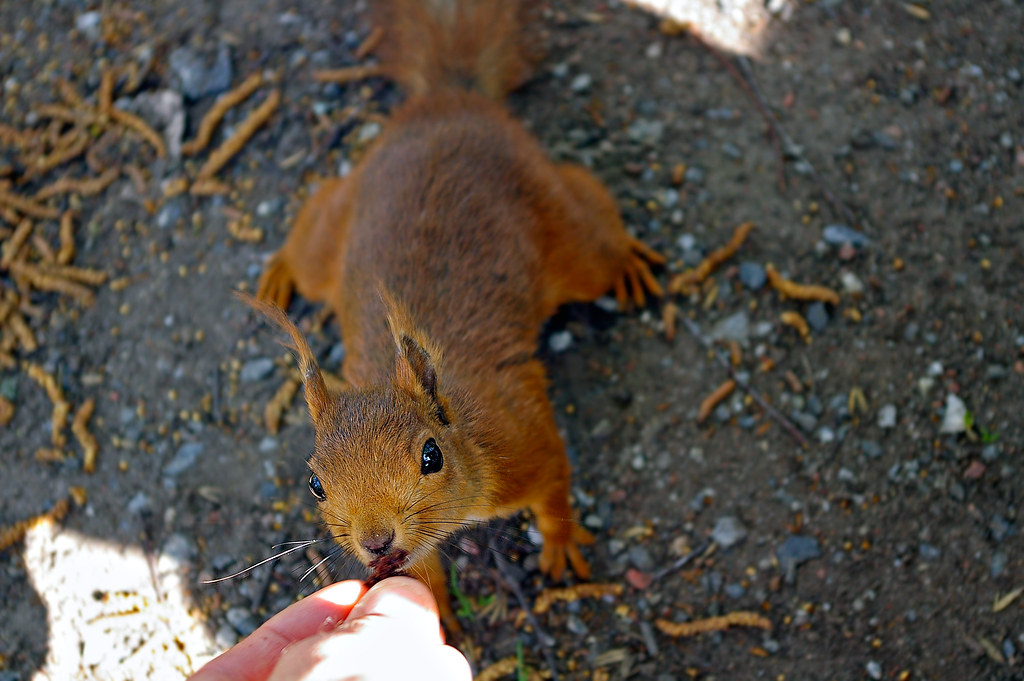 Squirrel Snack - _TNY.15.42.33