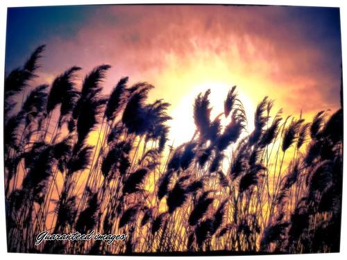winter sunset clouds reeds landscape me2youphotographylevel2 me2youphotographylevel3 me2youphotographylevel1