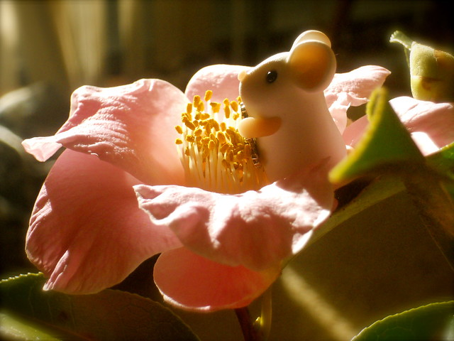 There's a mouse in my camellia!