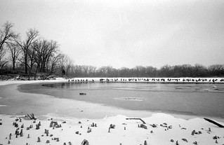 Geese Standing on Ice (Kentmere 100 and Diafine test) | by Fogel's Focus