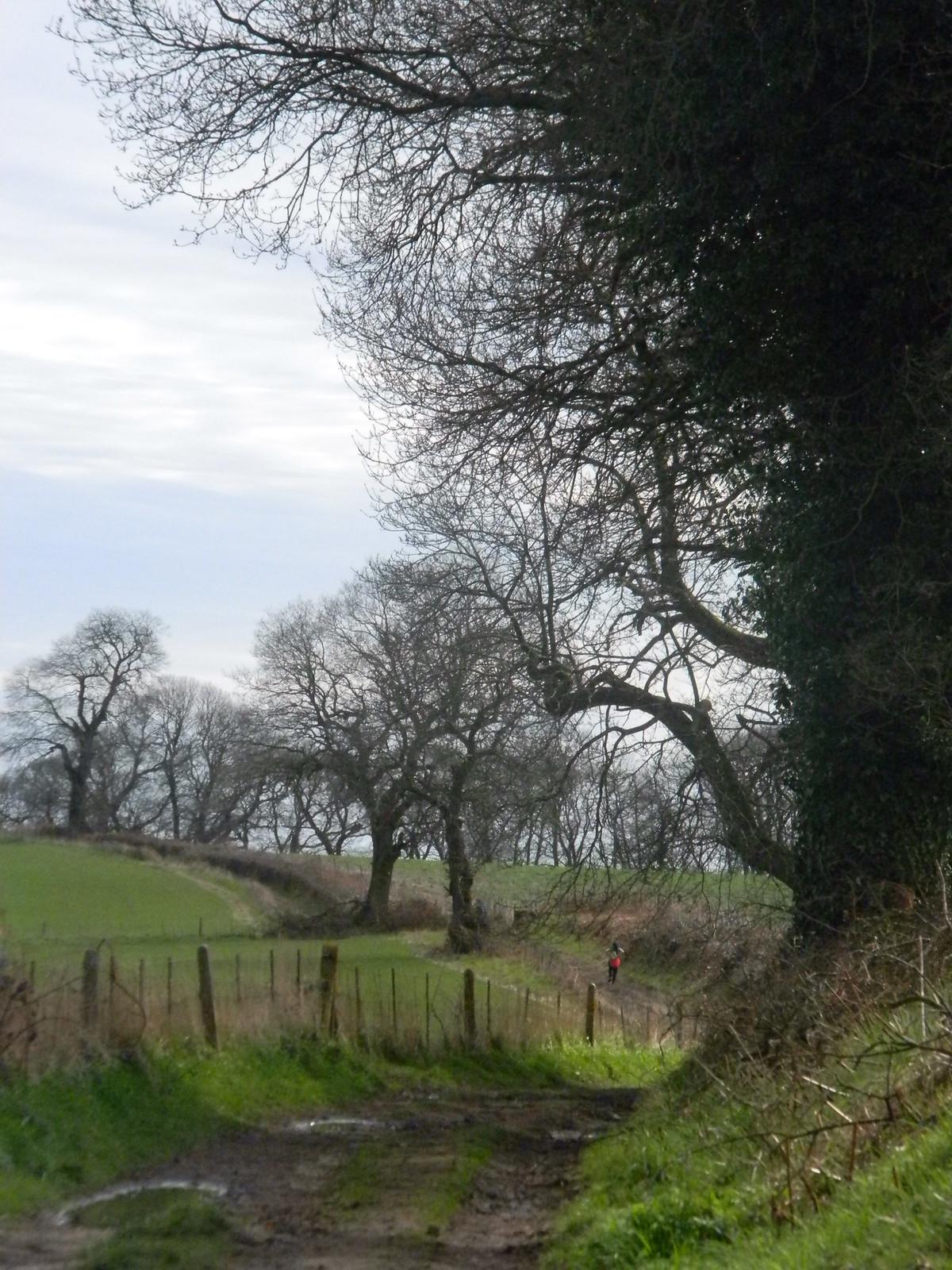Greensand Way Milford to Godalming