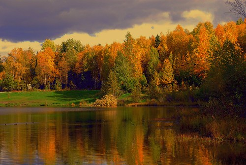 fall alaska day cloudy greenscene saariysqualitypictures outstandingromanianphotographers